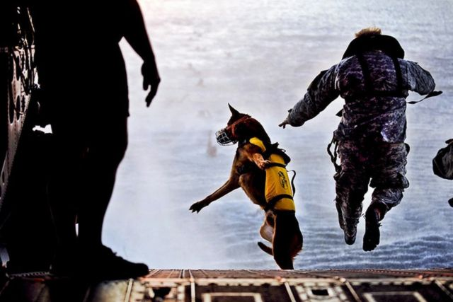 The Dogs of War- MWD, Military Working Dogs (3)