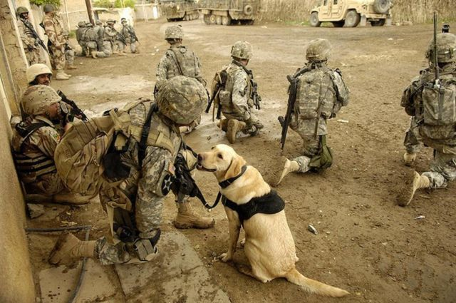 The Dogs of War- MWD, Military Working Dogs (1)