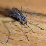 Malaria vaccine 100percent effective