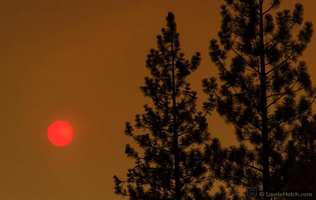 Rim Fire Strawberry Sun