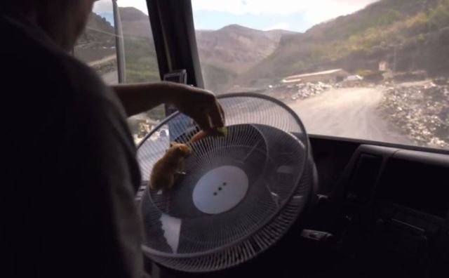 A hamster driving a 15-tonne truck