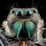 Incredible Macrophotographs of insects
