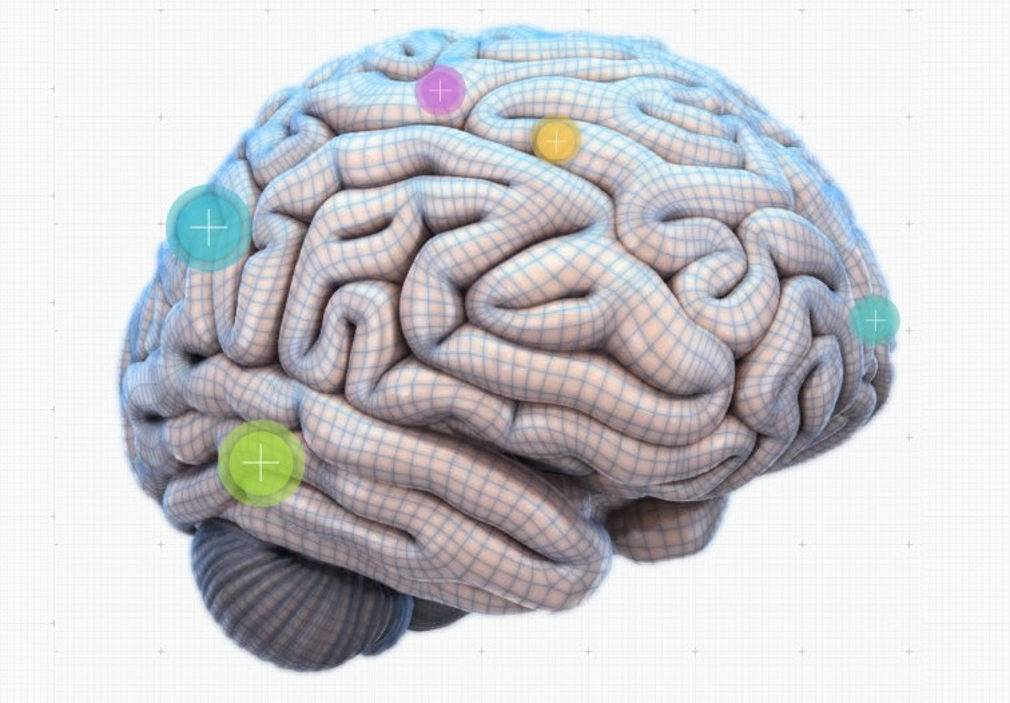 An Interactive map of our Brain   wordlessTech