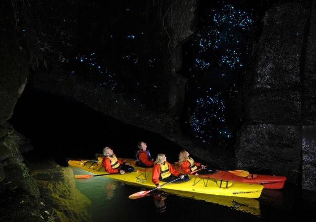 Glowworms illuminate the caves (4)