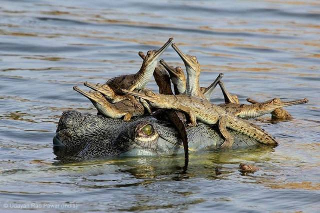 Young Wildlife Photographer of the Year - Grand Title Winner. Mother's Little Headful