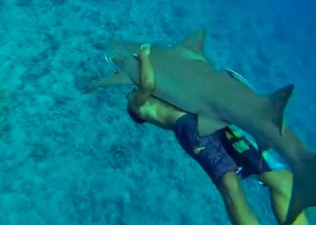People are now Riding Sharks 1