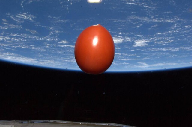 Tomato in space