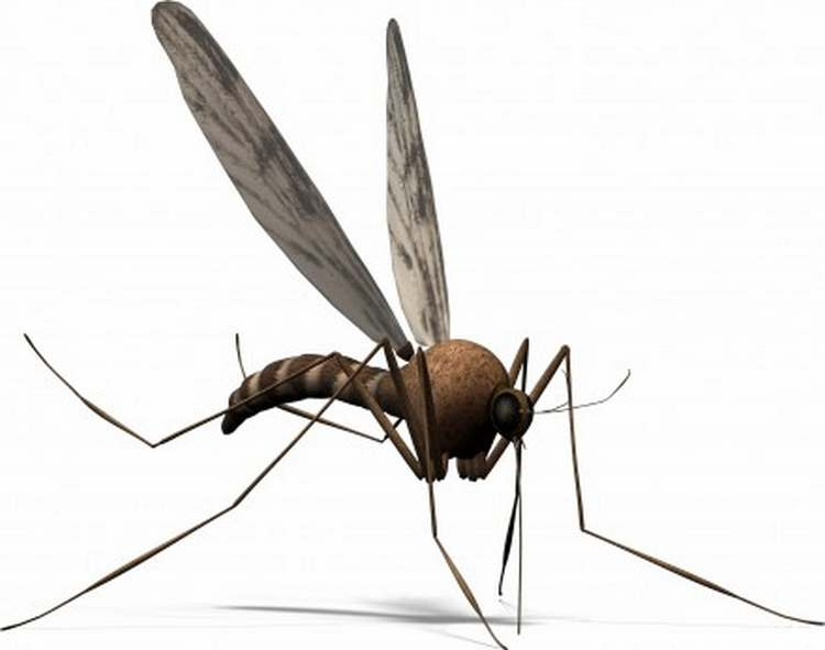 A new method will make us Invisible to mosquitoes