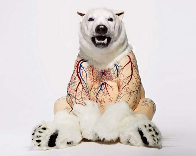 Furless anatomy of bears by Deborah Simon  1