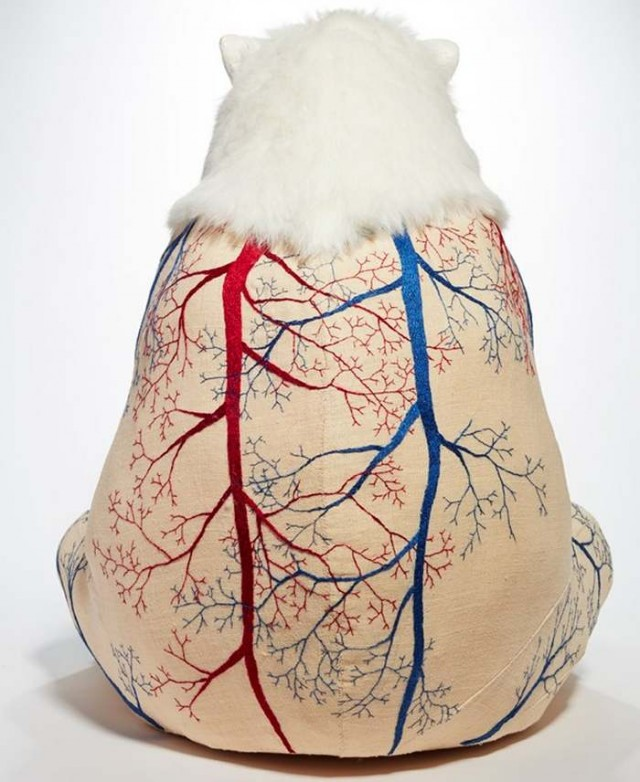 Furless anatomy of bears by Deborah Simon (6)