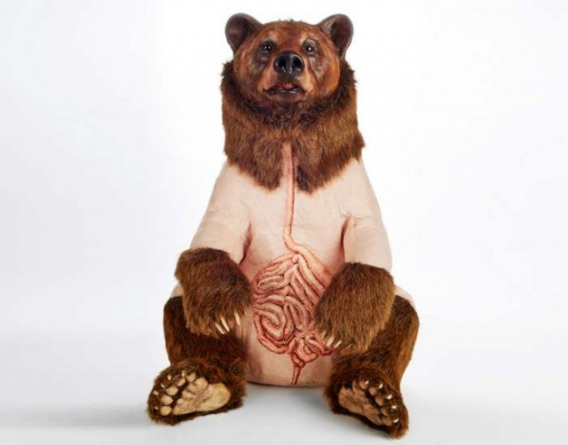 Furless anatomy of bears by Deborah Simon (5)