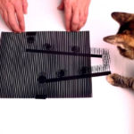 Optical illusions that will fool your Cat