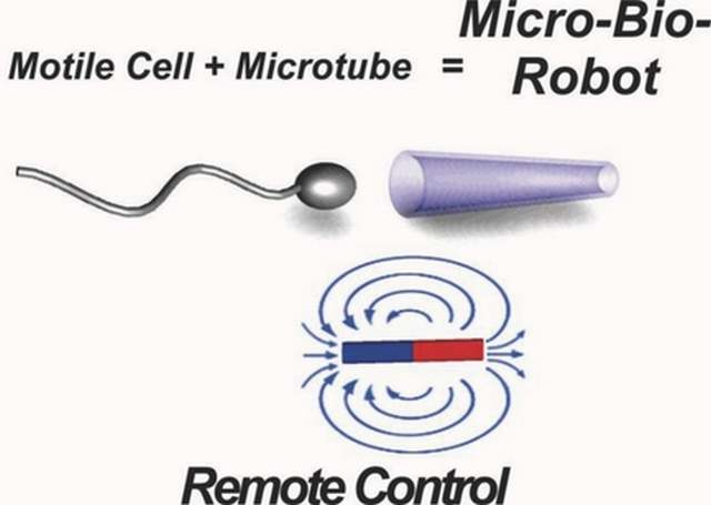 Remote controlled Cyborg Sperm (2)