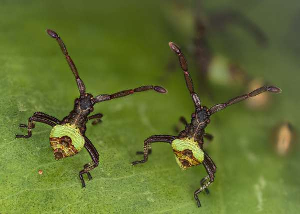 The winners of the 2013 Olympus BioScapes competition (2)