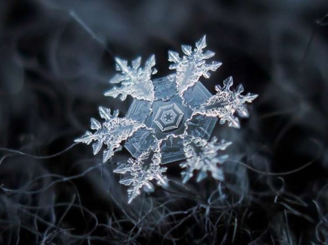 These snowflakes photos are real (1)