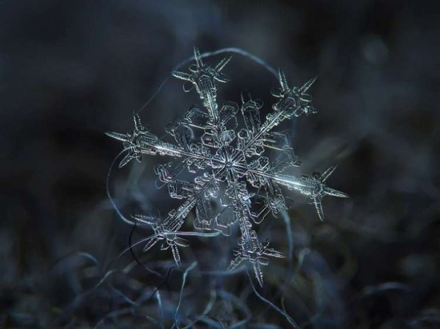 These snowflakes photos are real (9)