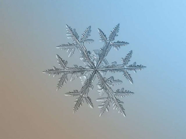 These snowflakes photos are real (6)
