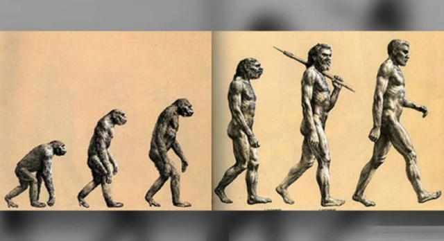 This is Not what Evolution Looks Like