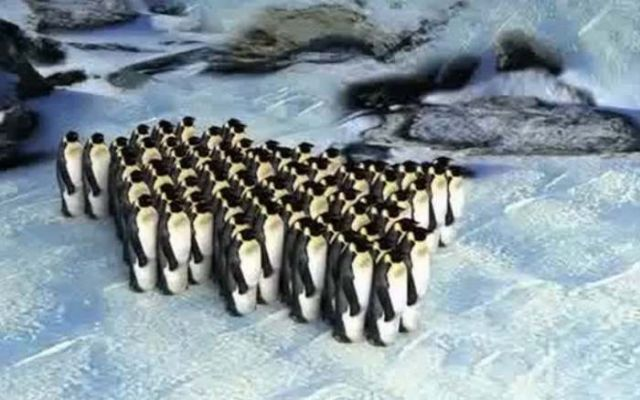 Why Penguins move like cars in traffic 2
