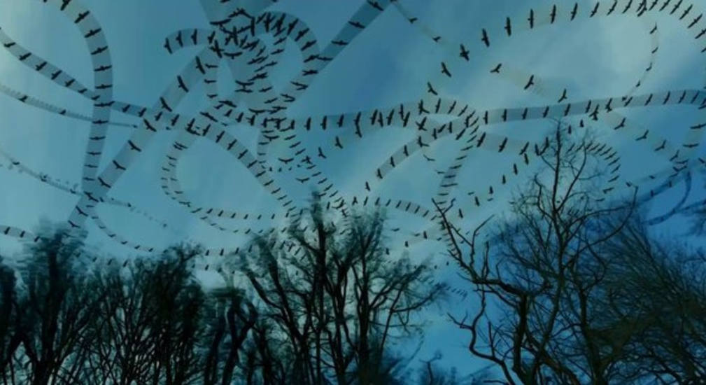 Flight paths of birds in the sky