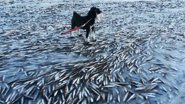 In Norway it's so cold that fish are freezing 1