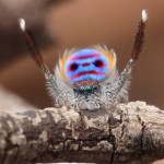 Spider Dances to YMCA