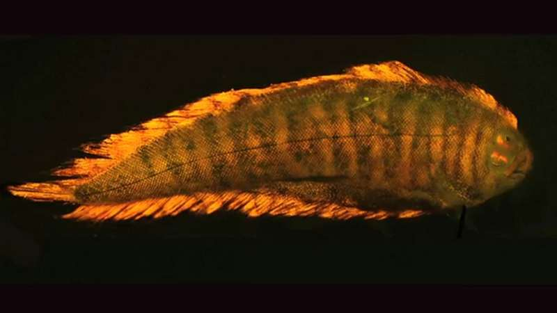 The Biofluorescence light that only Fish can see (5)