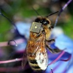 Tiny sensors monitor honeybee behaviour