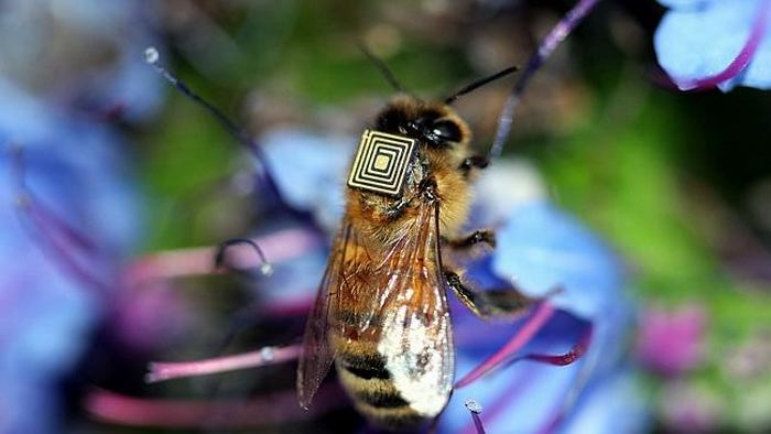 Tiny sensors monitor honeybee behaviour 1