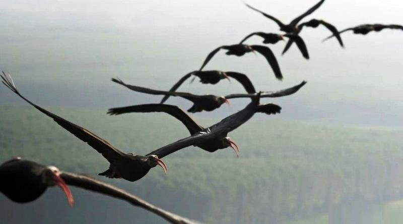 Why do some birds fly in a V 1
