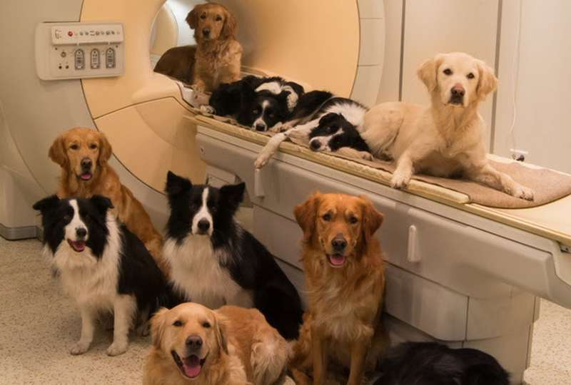 Dogs as Conscious as Human Children (1)
