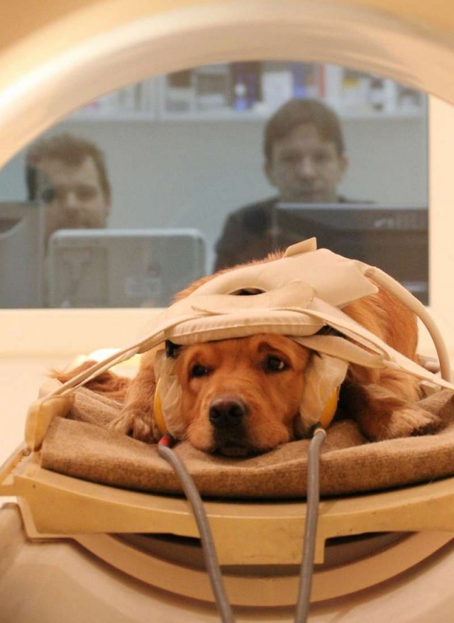 Dogs as Conscious as Human Children (2)