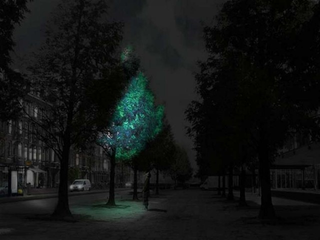 street lighting with glowing trees