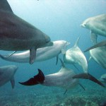 'Seaweed' is the first word from a Dolphin ever Transla...