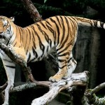 Lions and Tigers and Bears No More: 10 Animals That Mig...