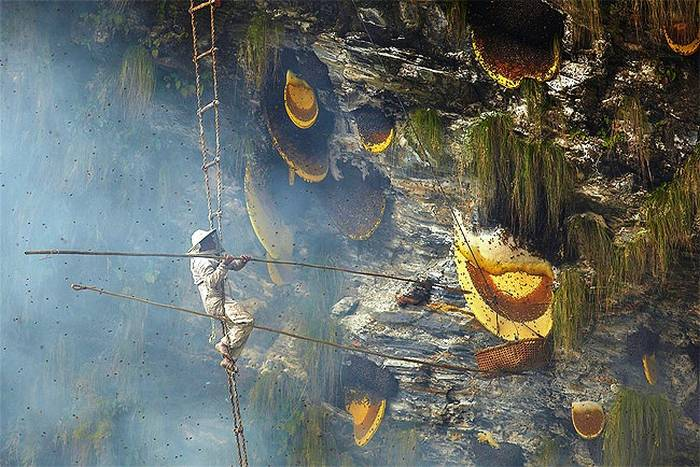 Honey Hunters of Nepal (8)