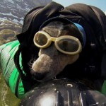 First dog to fly on a Wingsuit