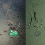 Our Ocean Floors are covered in Garbage
