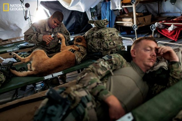 Dogs of War (2)