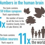 Understanding the scale of the Human Brain- infographic
