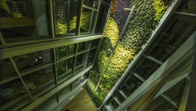 World's tallest vertical garden