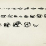 Striking Ad Campaigns about endangered species