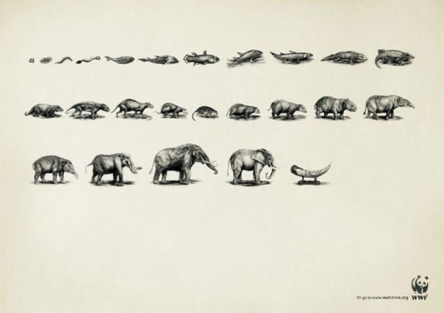 Ad Campaigns for endangered species