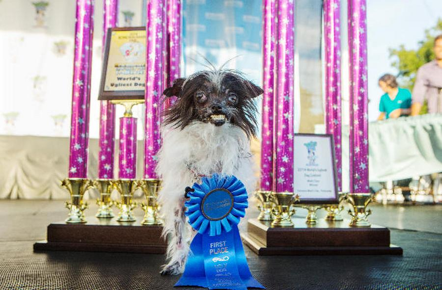 World S Ugliest Dog 2014 Winner Wordlesstech