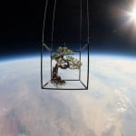 Artist sends a Bonzai to Space