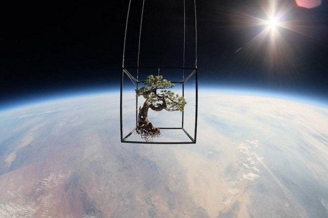 Bonsai to Space