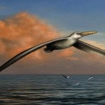 Biggest-Ever Flying Bird