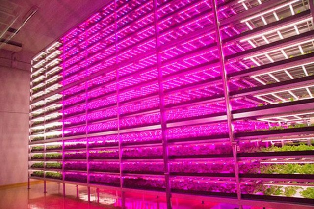 Indoor farm (2)