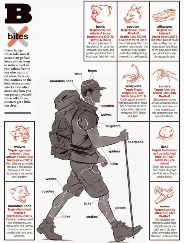 Preventing Bites from Animals
