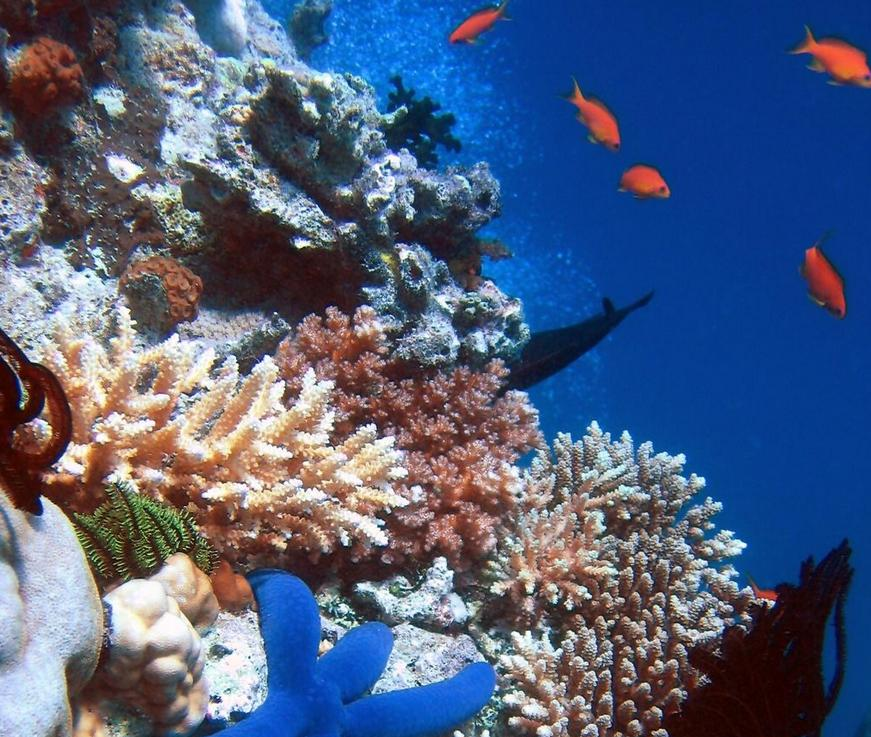 importance of coral reef Full-text paper (pdf): importance of live coral habitat for reef fishes.